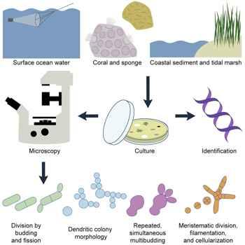 experimento con hongos marinos
