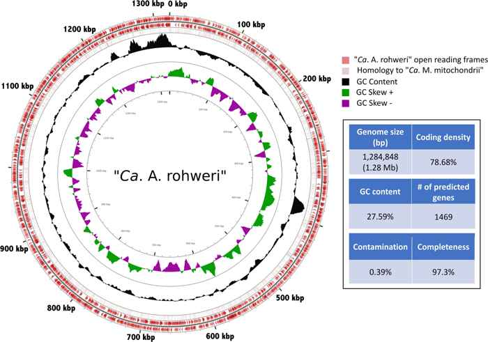 genoma de Candidatus Aquarickettsia rohweri