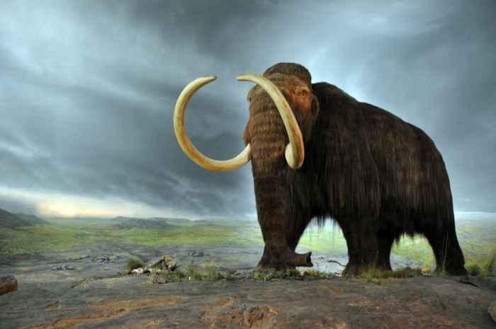 mamut lanudo (Mammuthus primigenius)