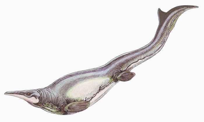mosasaurio Plotosaurus bennisoni