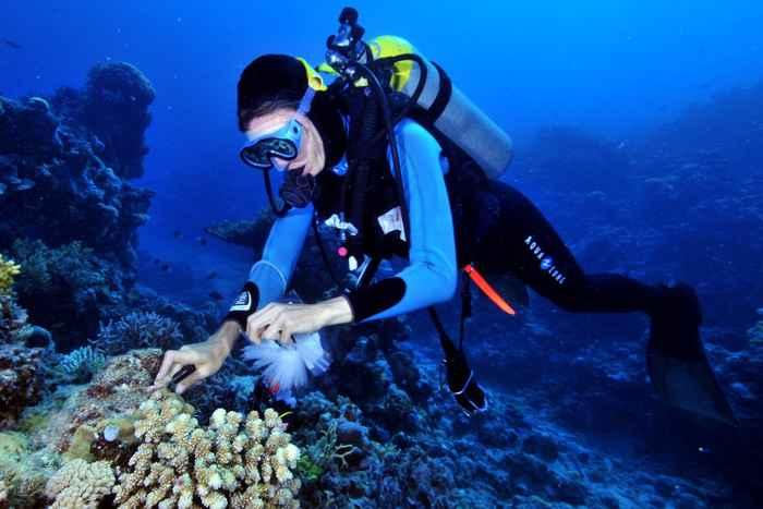 recogida de muestras de esponja marina