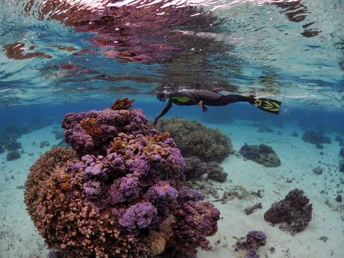 observación corales afectados con la bacteria