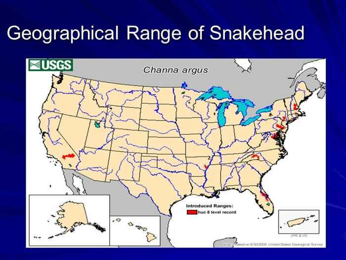 distribución del pez cabeza de serpiente