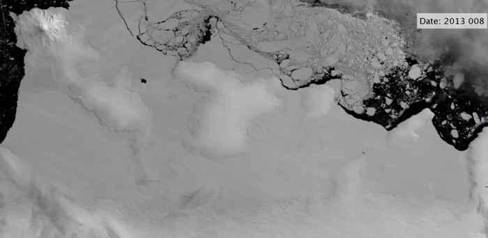 polinias en la Antártida