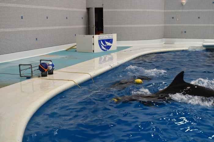 tarea de tirar de la cuerda con delfines