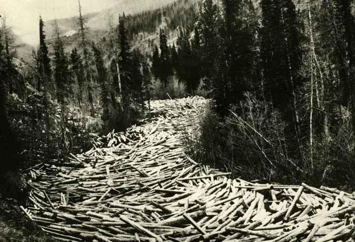 troncos en la Columbia Británica