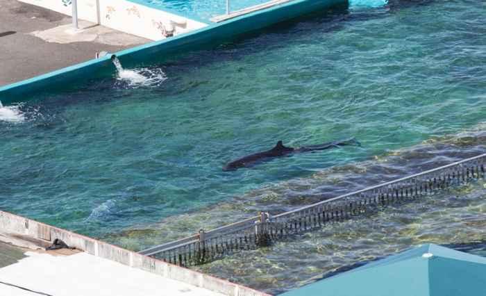 Kina en el Sea Life Park de Hawái