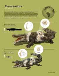 Purussaurus mirandai