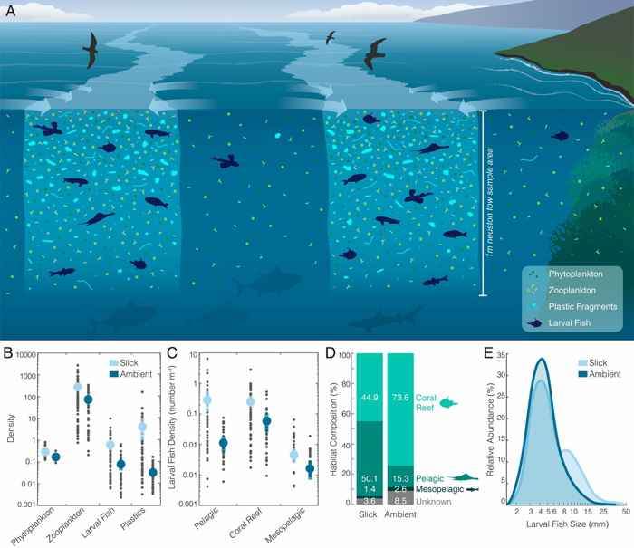 acumulaciones de larvas de peces y plásticos en diferentes hábitats