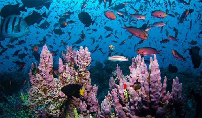 área marina protegida