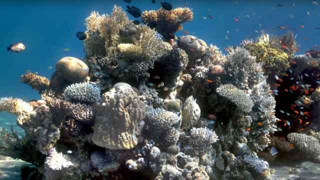 arrecife de coral retocado con Sea thru