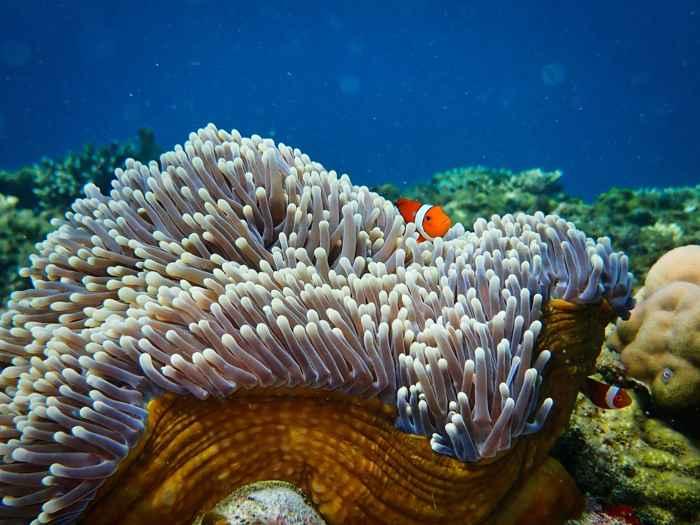 arrecife saludable