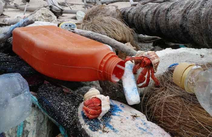 cangrejo ermitaño junto a una botella de plástico