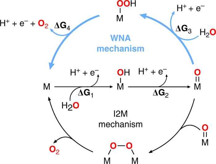 ciclos catalíticos de REA