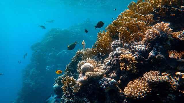comunidades oceánicas