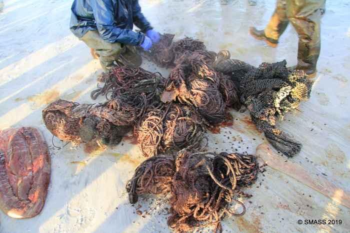 cuerdas en el cachalote varado