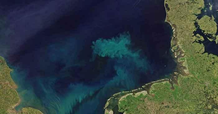 floración de algas