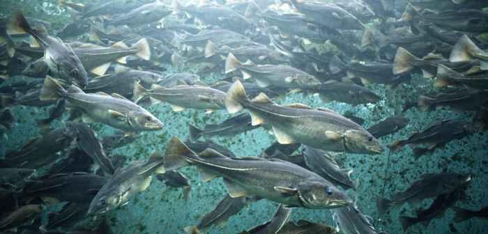 granja de peces