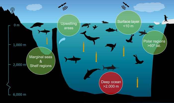 instrumentos en animales marinos
