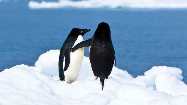 pingüinos homosexuales