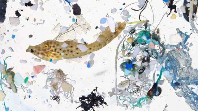 plásticos y pez recogidos por una red de arrastre