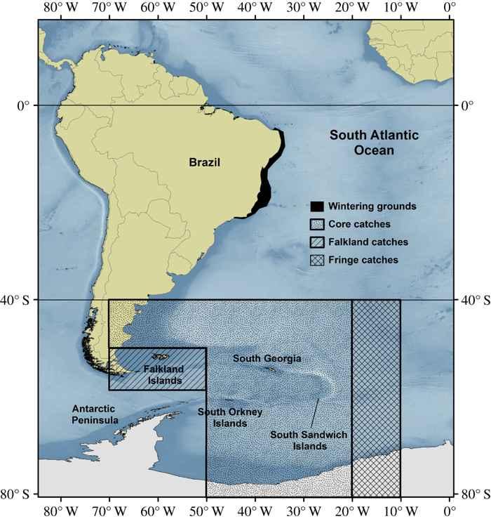 población de ballenas jorobadas en el Atlántico sur