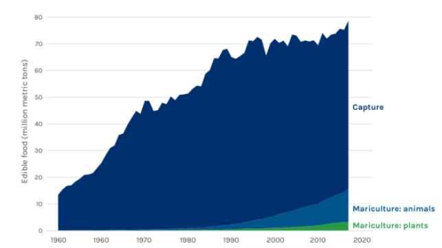 producción alimentaria del océano