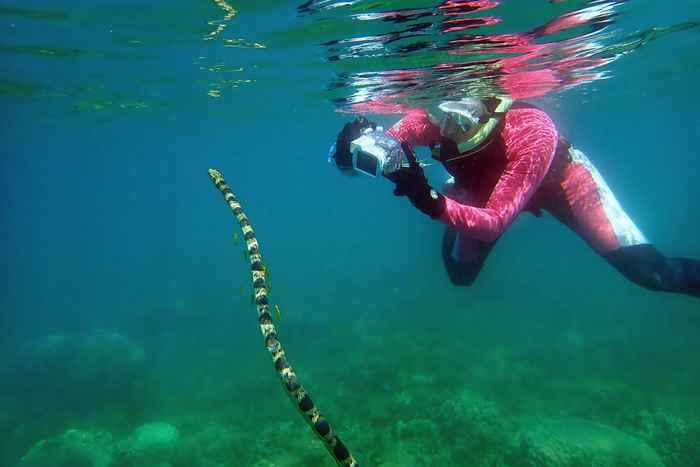 serpiente marina mayor fotografiada por la Dra. Goiran