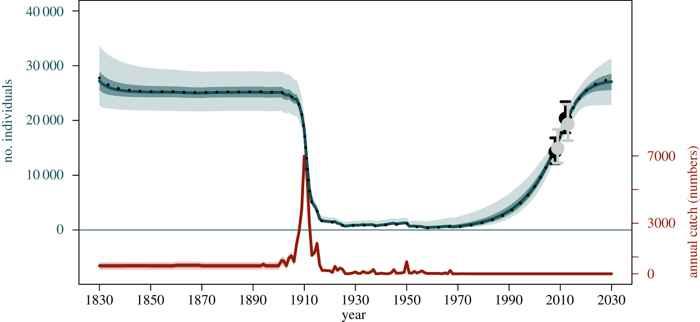 trayectoria de la población de ballenas jorobadas
