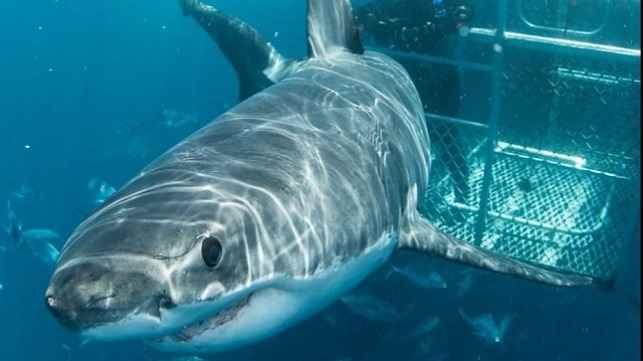 turismo en jaula de tiburones