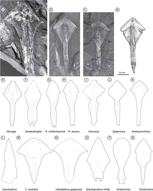 fósiles de Isityumzi mlomomde