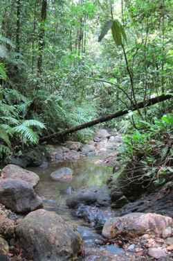 arroyo de Trinidad