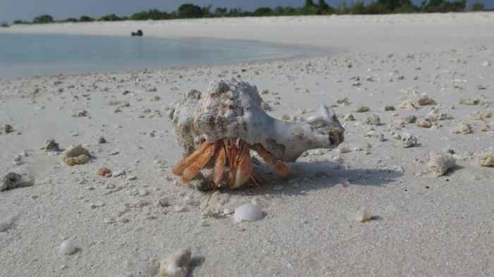un cangrejo ermitaño en la playa