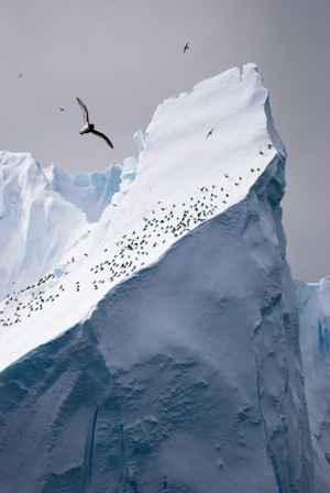colonia de albatros