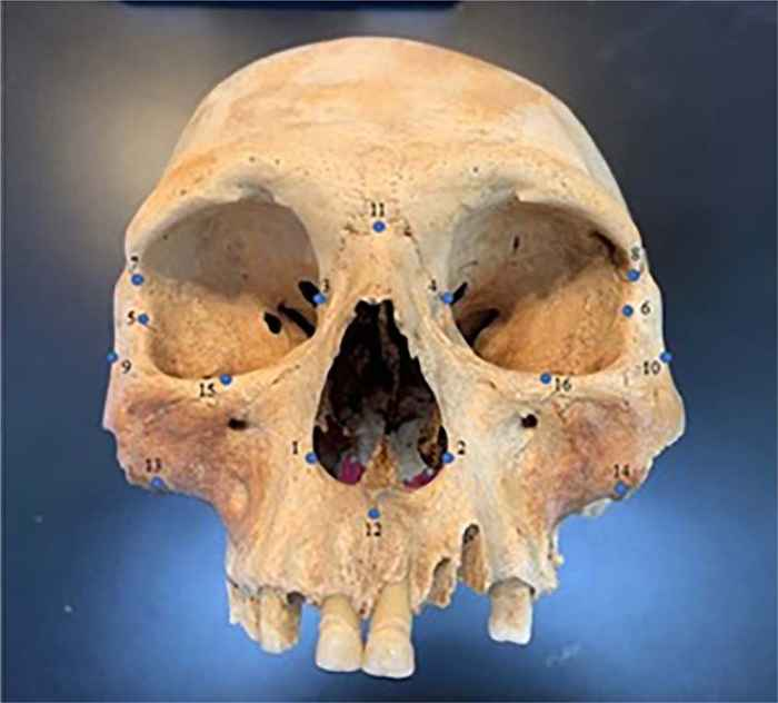 cráneo precolombino