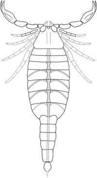 reconstrucción del escorpión Parioscorpio venator