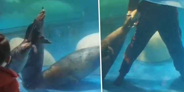 foca atrapada en un desagüe