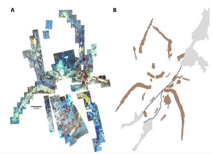 fósil de araña gigante falso al microscopio
