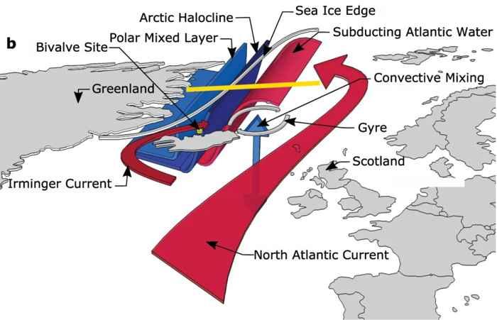 hielo marino ártico y conchas