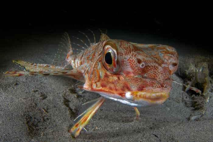 pez por Davide Lombroso