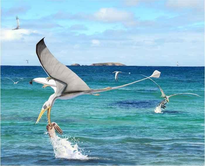 pterosaurios cazando calamares