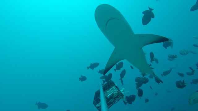 tiburón en una reserva marina