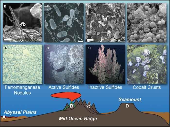 tipos de hábitats de aguas profundas