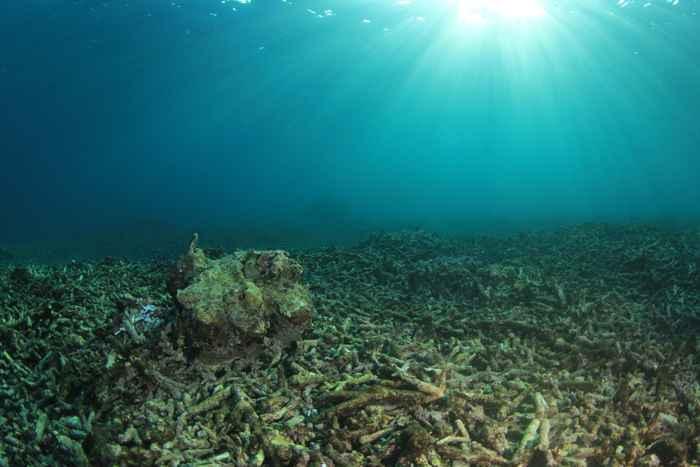 acidificación del coral