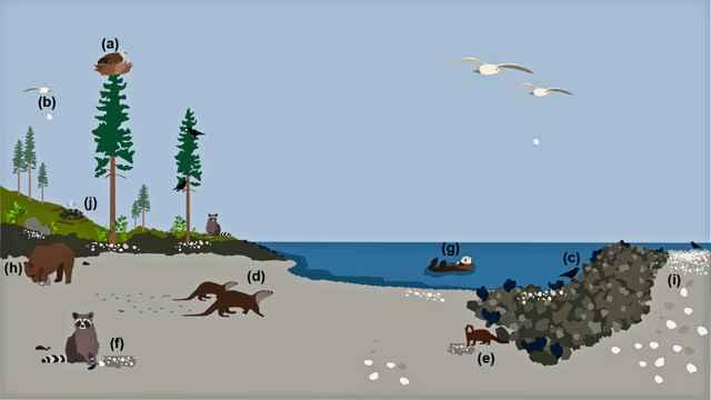animales que llevan mariscos al bosque