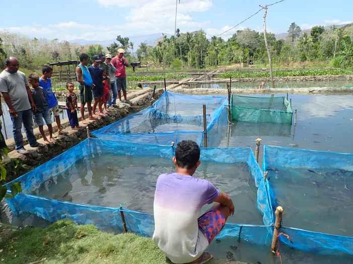 cultivo de tilapia