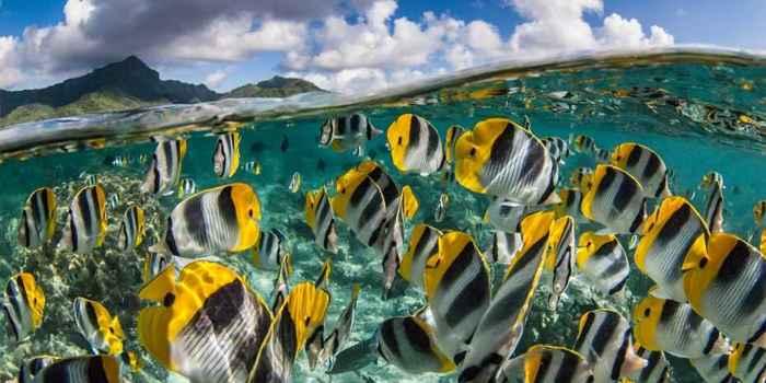diversidad genética de peces