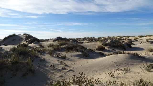 dunas de aran en el Parque Nacional de Doñana