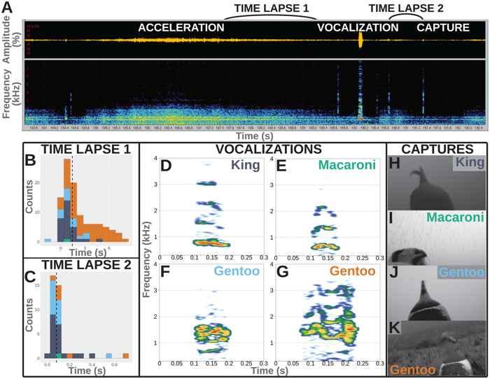 estudio de vocalización de los pingüinos