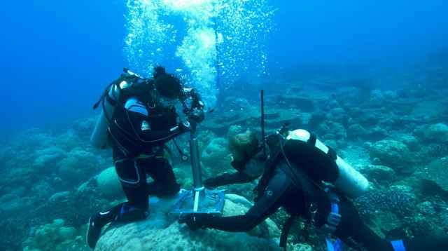 investigación corales en el Océano Índico
